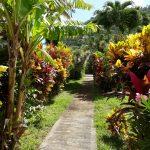 Carrod's Gardens