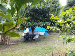 Rodney;s Wellness Retreat Big Banana Campground